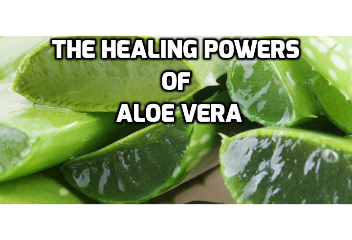 Click on Here to Find Out More About the Health Benefits of Aloe Vera - Healing benefits of Aloe Vera - Aloe vera cuts ulcer risk - A gel made from the herb aloe vera may help to treat and prevent stomach and intestinal ulcers. A team from the Barts and London, Queen Mary's School of Medicine and Dentistry have carried out tests which show that the herb has a beneficial effect on the production of substances which help boost the healing process in cases of ulceration in the gut.