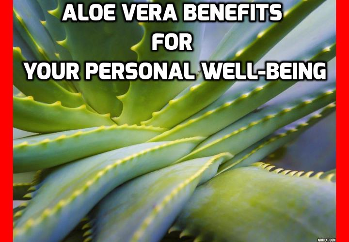 Revealing Here the 3 Major Aloe Vera Benefits for Your Personal Well-Being   -  Aloe Vera benefits for women- Everywhere you look today there are products that claim to contain aloe, making it one of the most popular additives for bath and beauty products. This is because of Aloe's purported abilities to help heal and rejuvenate the skin. Read on here to find out more.