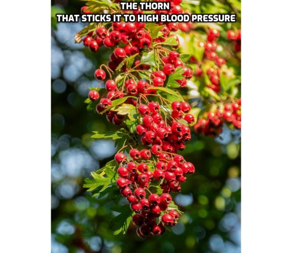 What is the Best Way to Control Your High Blood Pressure Naturally? Control Your High Blood Pressure Naturally - The Thorn That Sticks it to High Blood Pressure. Thorns are usually associated with hurting rather than healing, but a near neighbour to the common Tea Rose looks set to have its hidden health properties gain wider attention. It's a potent herbal remedy that you might have growing in your own garden, and it's great at lowering blood pressure and cholesterol.