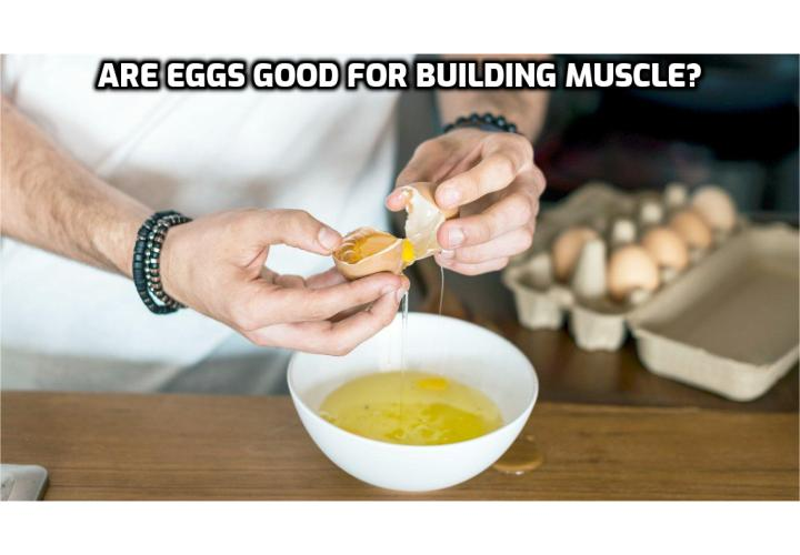 Are Eggs Good for Building Muscle? Eggs do contain a large variety of nutrients, as well as dietary cholesterol. The dietary cholesterol does not appear to cause nor promote cardiovascular diseases in healthy persons. Egg yolks are rich with B-vitamins, trace minerals, vitamin A, folate, choline, lutein, and other powerful nutrients. There's no question that vegetarian bodybuilding is easier with eggs integrated into the meal plan.