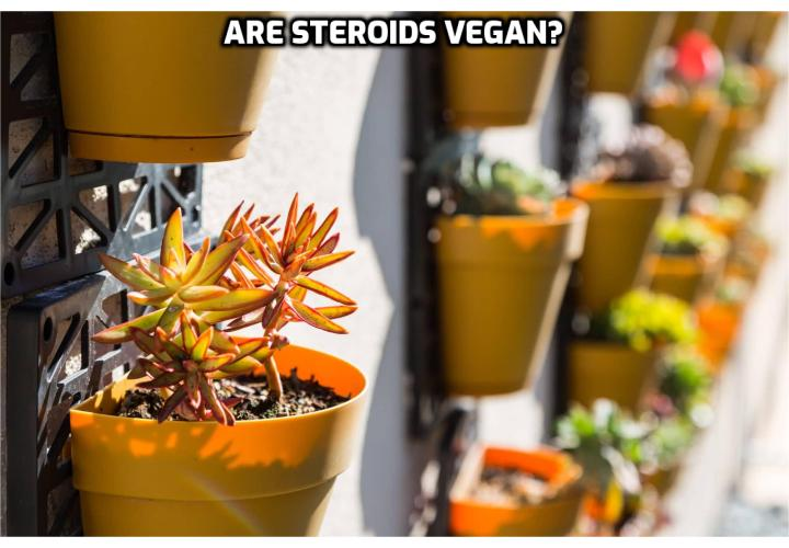 "Are steroids vegan? I wrote this article because it appears that ""are steroids vegan"" is a popular search on Google these days. To the best of my knowledge, steroids are not vegan*.*But steroids are technically vegetarian. Steroids are found in animals, plants, and even fungi. All steroids are manufactured in cells from the sterols lanosterol (animals and fungi) or cycloartenol (plants)."