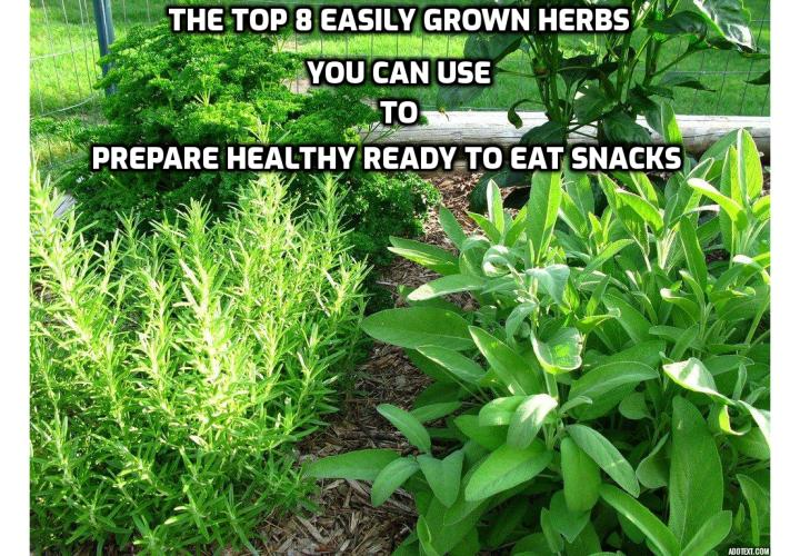 Some of the best nutrients that nature provides us comes packaged up in small containers. Herbs are some of those things. What are the top 8 easily grown herbs you can use to prepare healthy ready to eat snacks? Read on to find out more.